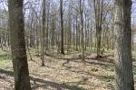 Frühlingswanderung ins Tal der Kelten 02.04.2011